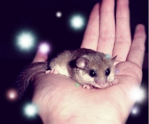 Dormouse_on_handedited