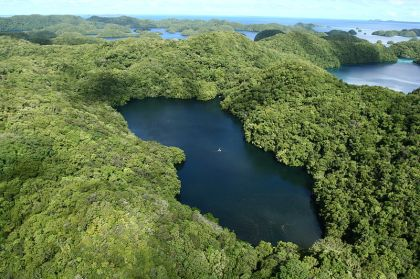 Aerial view of Jellyfish Lake in Palau (via Wikimedia Commons)
